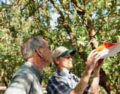 California Almond Production: Success through Sustainability.