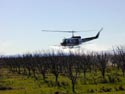 Aerial application of insecticide to dormant orchard