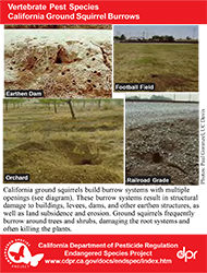 California Ground Squirrel Burrows identification card