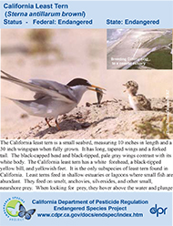 California Least Tern identification card