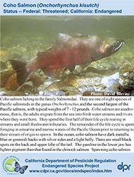Coho Salmon identification card