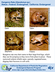 Kangaroo Rats identification card