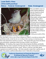Least Bells Vireo identification card