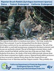 Riparian Brush Rabbit identification card