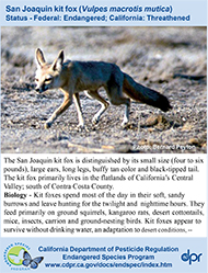 San Joaquin Kit Fox identification card