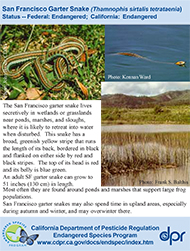 San Francisco Garter Snake identification card
