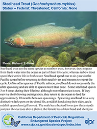 Steelhead Trout identification card
