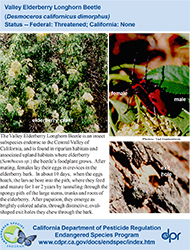 Valley Elderberry Longhorn Beetle identification card
