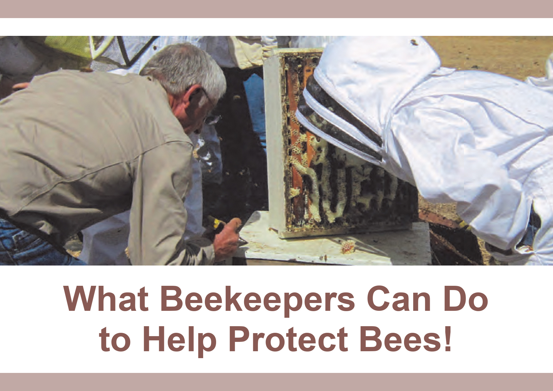 What Beekeepers Can Do to Help Protect Bees!