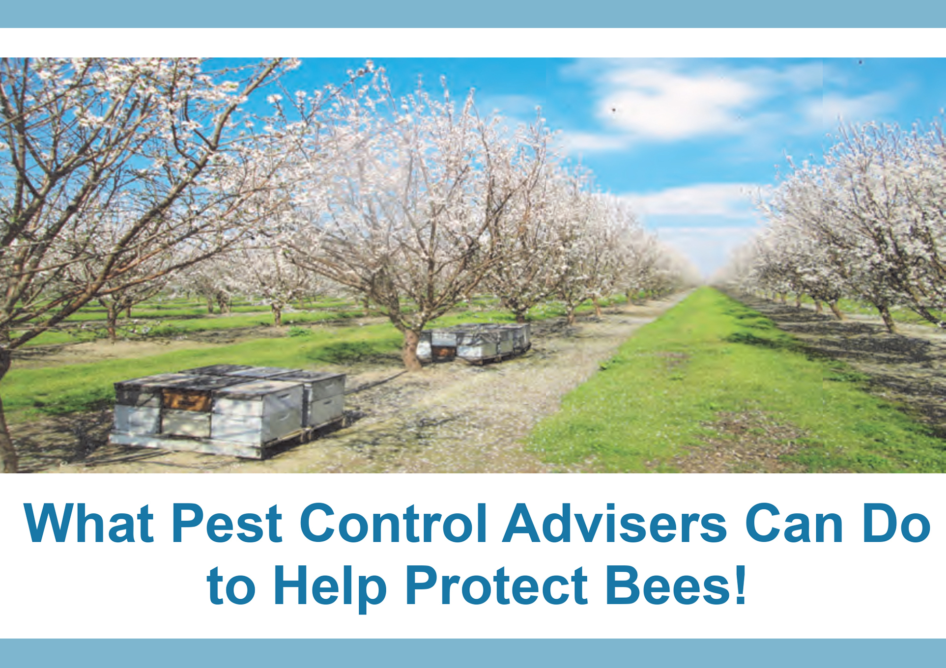What Pest Control Advisers Can Do to Help Protect Bees!