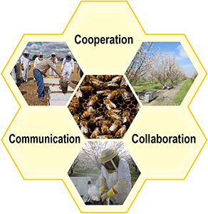 Pollinator cooperation, communication, collaboration image.