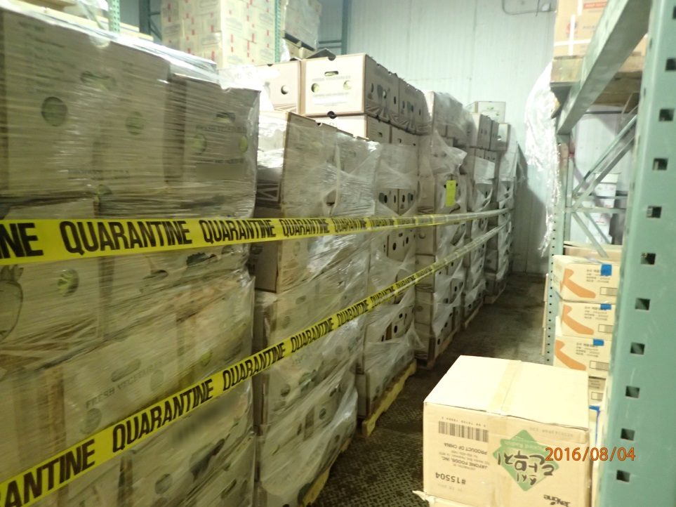 This lot of 14 pallets of napa cabbage was quarantined by DPR scientists on suspicion of carrying illegal pesticide residues, and later destroyed after the CDFA laboratory confirmed illegal residues were present.