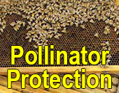 Pollinator Protection thumbnail
