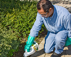 Maintenance gardener applying general use pesticides