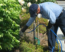 Maintenance gardener applying a restricted pesticide with a sprayer