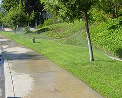 Irrigation runoff going from sidewalks to the street