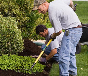 Two gardeners mulching a plant bed