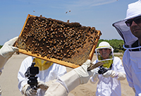 Image of apiary training sponsored by DPR, Parlier, CA. June 2014